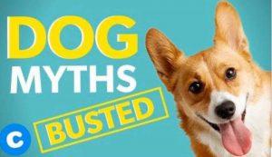 Dog Behaviour Myths