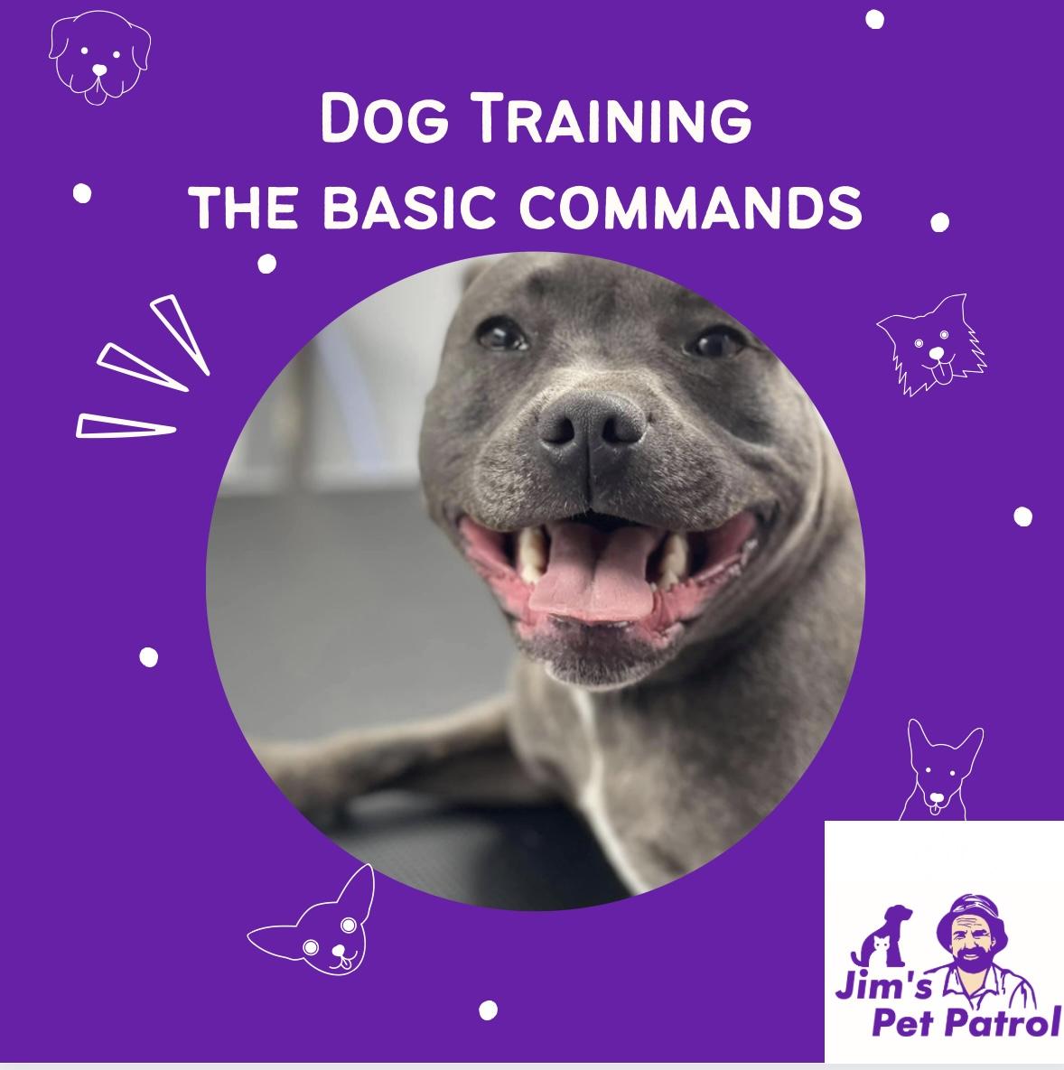 Dog training – Basic Commands