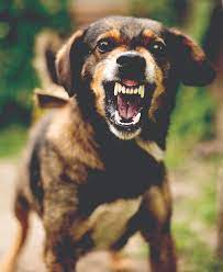 Is Your Dog Aggressive? What To Do About It